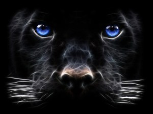 Backgrounds-Windows-7-Black-Panther-Big-Cat-Desktop-Wallpaper