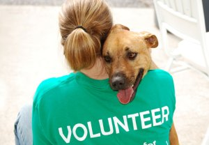 animal-rescue-volunteer-web