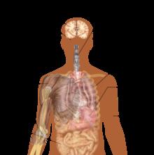 220px-Symptoms_of_ebola